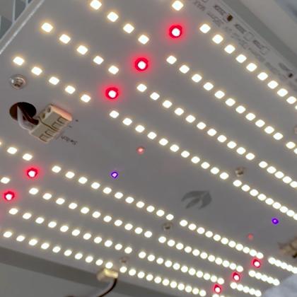 LED SMD: Quantum Board Master Plants