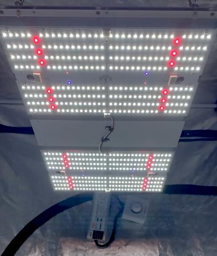 LED Full Spectrum: Quantum Board Master Plants
